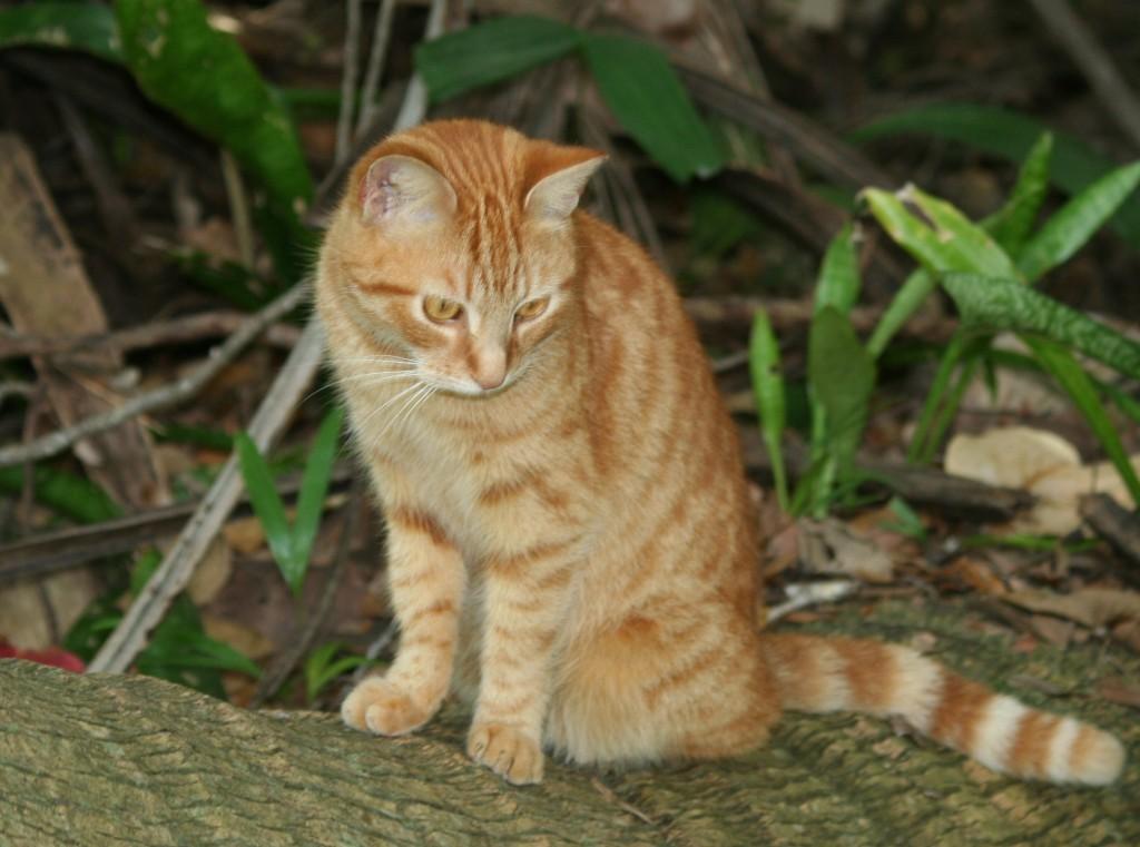 Marmalade Kitten