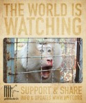 Thai Government Raids NGO Injuring  Animals / Pet Bloggers Blog Hop