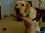Autistic Boy Denied Service Dog in School