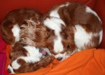 Wordless Wednesday Sleeping Dogs