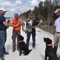Dogs detect pythons in the Everglades