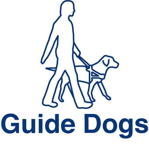 Guide dogs for the blind - photo#14
