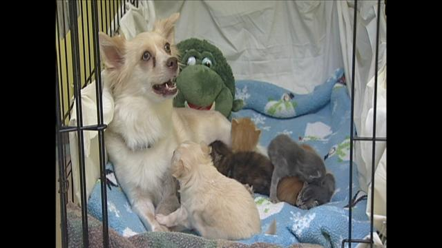 Sante and her puppy and kittens