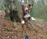 Amazing Acrobatic Dog / Pet Bloggers Blog Hop