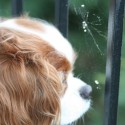 dog looking at a spider