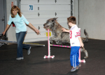 Agility Ability – Agility Dogs Help Special Needs Children