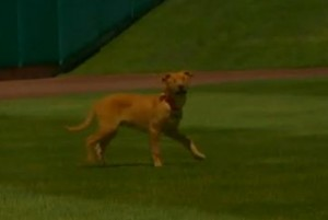 Isotopes new Mascot Blind Dog
