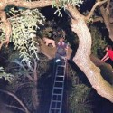 Wheaten Terrier Stuck in Tree