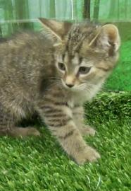 cat available for adoption at Cleveland APL
