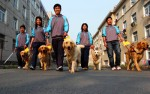 China Passes New Law About Guide Dogs