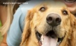 Knox's Best Days Ever – Dog with Cancer Sparks Viral Campaign
