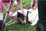 Dog trapped in pipes