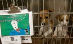 Emergency Microchipping of Dogs Ahead of Hurricane Isaac