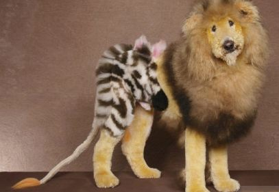 Dog Zebra and Lion