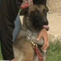 New Mexico Drug Sniffing Dog