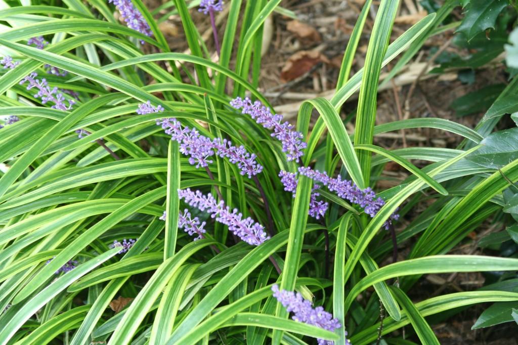 Purple Flowers In The Gr