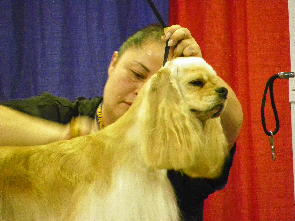 Super Zoo regular class grooming