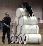 Police dogs from across Utah to compete for top dog