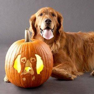 Search Dog pumpkin