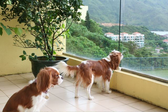 Is Hong Kong Dog Friendly - Discovery Bay
