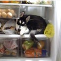 Dog in the Fridge