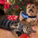 Thundershirts for dogs and cats