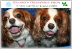 Season's Greetings from Two Little Cavaliers
