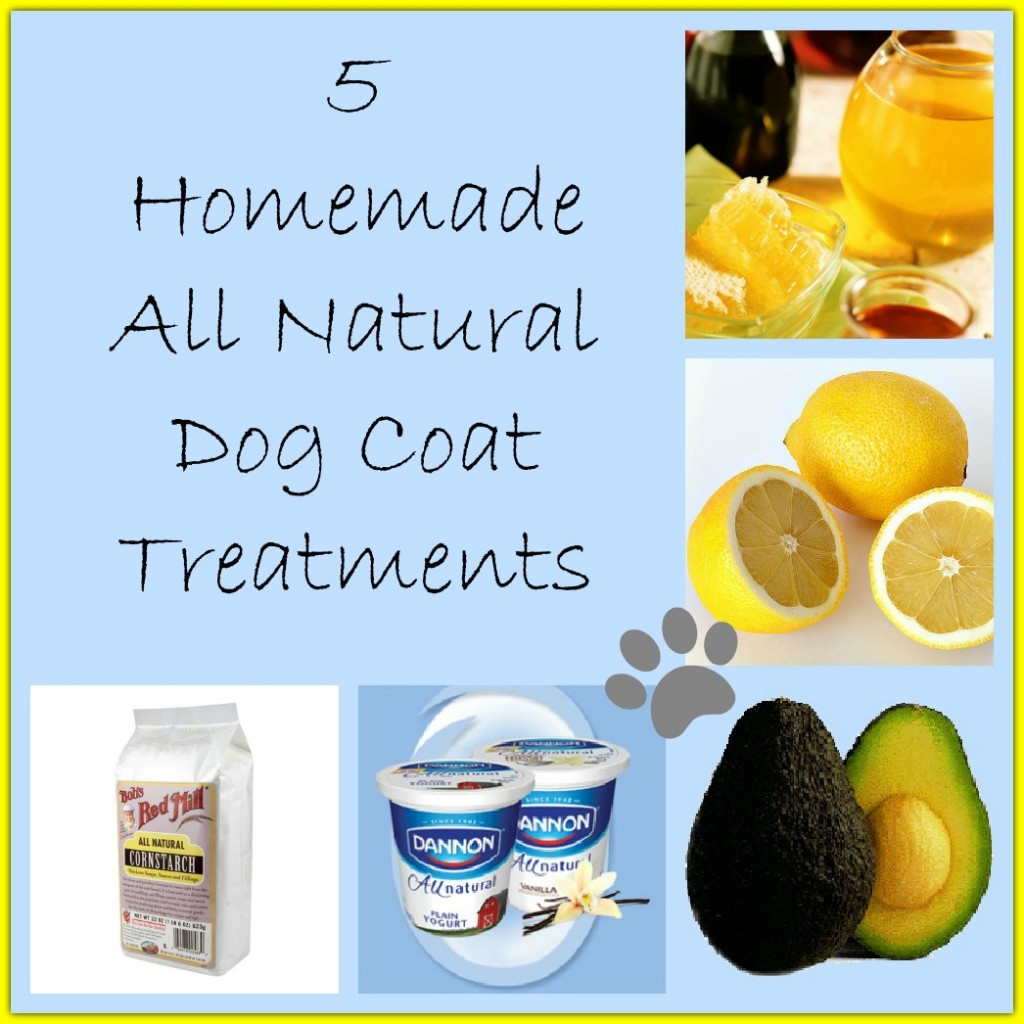 5 Homemade Dog Coat Treatments - http://twolittlecavaliers.com