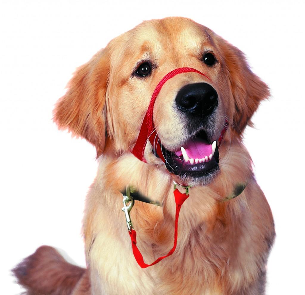 Head Collar For Dog Training