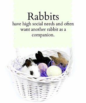 Rabbits are very social