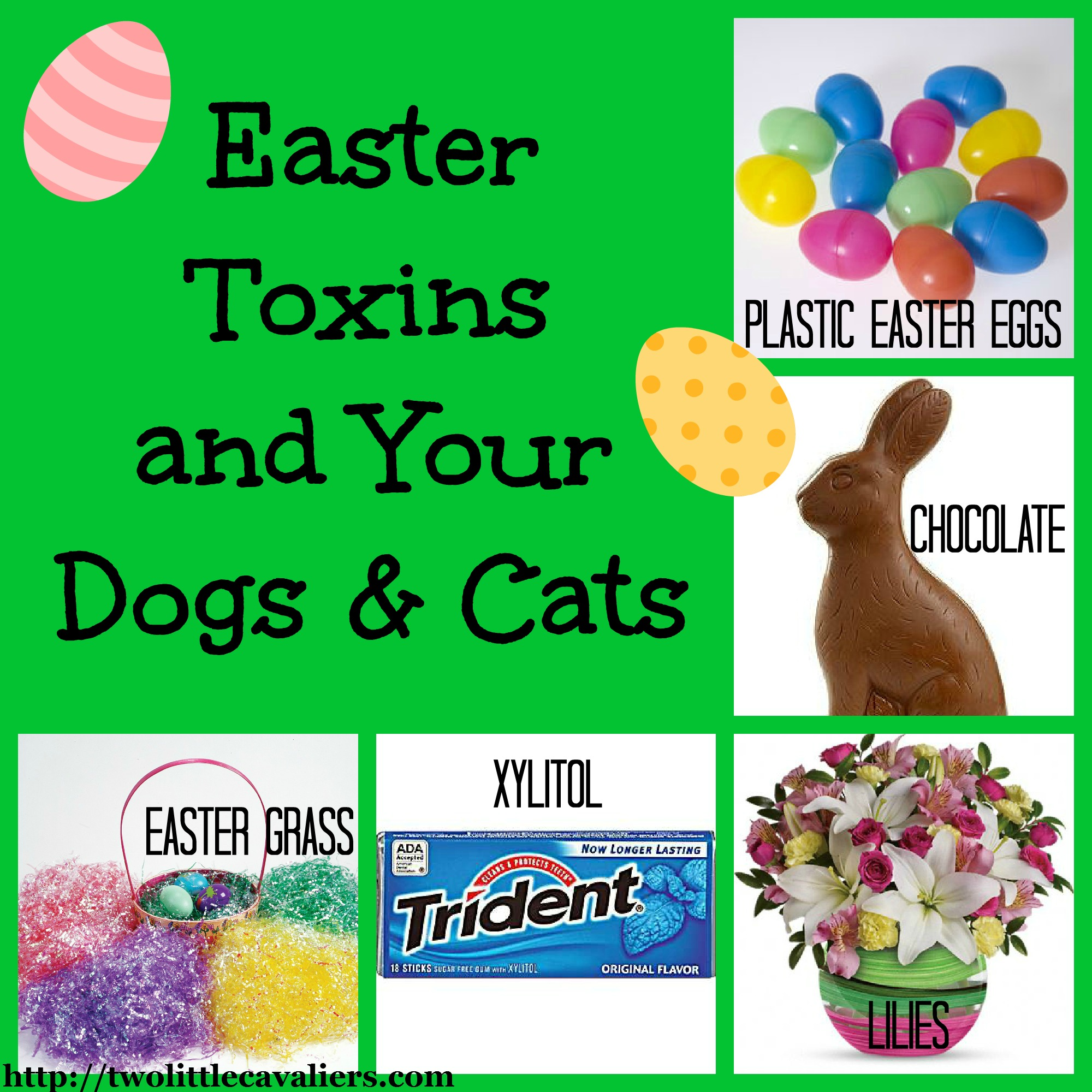 Easter toxins and your dogs and cats - Toxic plants for dogs and cats the danger behind flowers ...