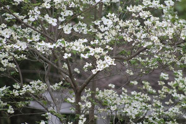 My Garden White Flowers
