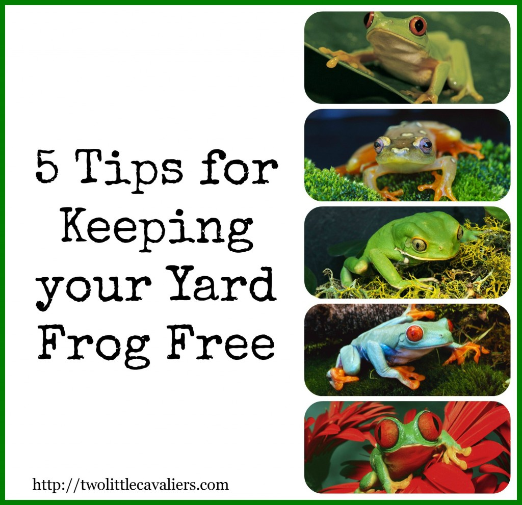 Frog are Poisonous to Dogs 5 Tips for Keeping your yard Frog free