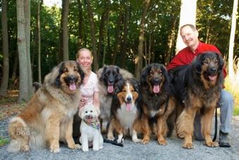 Τι καταφέρνουν οι θεραπευτικοί σκύλοι...