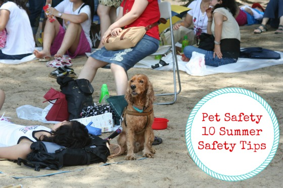 Pet Safety 10 Summer Safety Tips