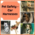 Pet Safety Car Harnesses 1