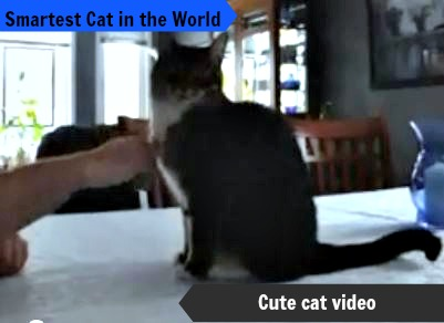 cat eye syndrome photos