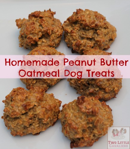 Homemade Peanut Butter Oatmeal Dog Treats