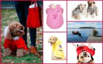Canada Pooch Assorted Fall Winter Styles