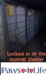 Locked in at the Animal Shelter 2