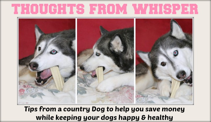 Tips from a Country Dog to help you save money while keeping your dogs happy and healthy