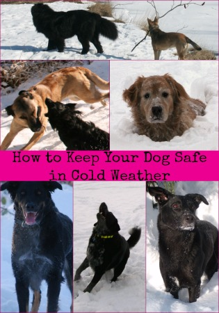 How to Keep Your Dog Safe in Cold Weather