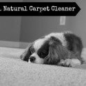 DIY All Natural Carpet Cleaner Safe to Use Around Your Pets