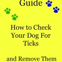 Step by Step Guide How to Check Your Dog For Ticks and safely remove them