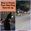 How to Create Your Own Dog Care Co-op