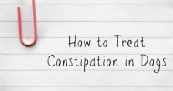 How to Treat Constipation in Dogs