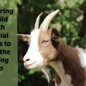 Preparing a Child With Special Needs to Visit the Petting Zoo