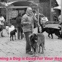owning a dog is good for your health