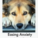 Easing Anxiety in Your Dog