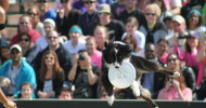 Purina ProPlan Incredibel Dog Challenge